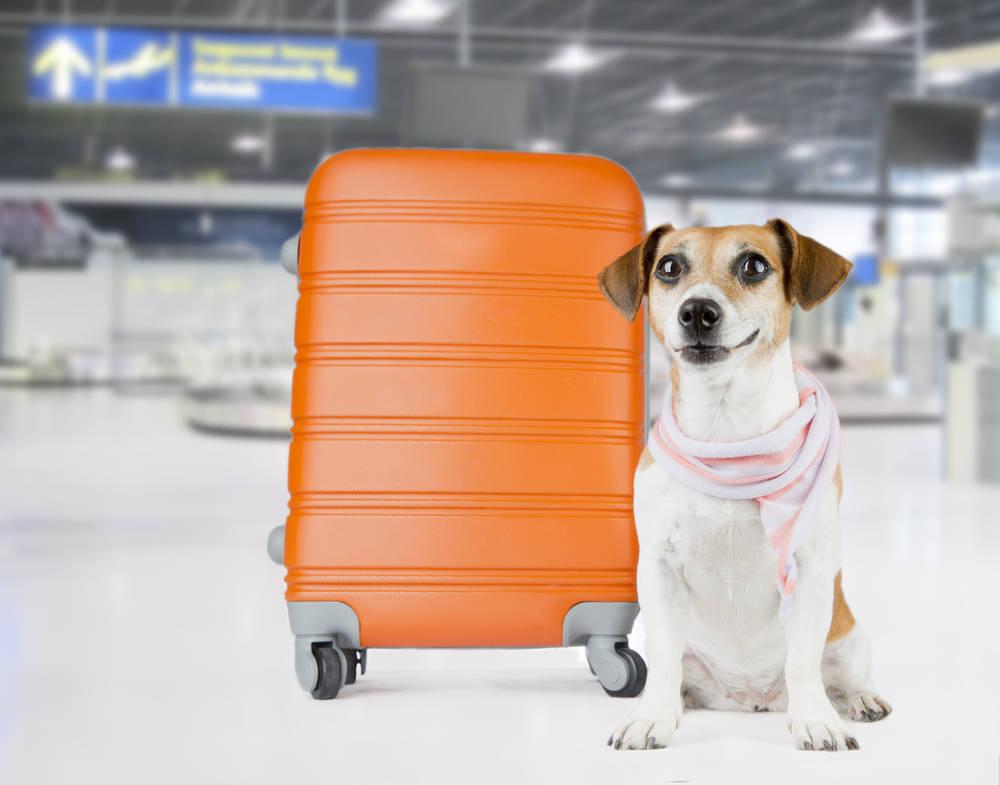Cuál es la mejor compañía para el transporte de animales por avión